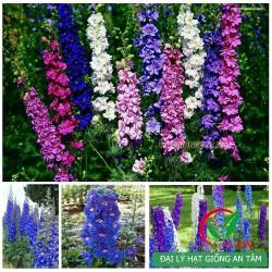 Hạt giống hoa phi yến mix (violet)