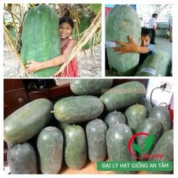 Hạt giống bí đao khổng lồ