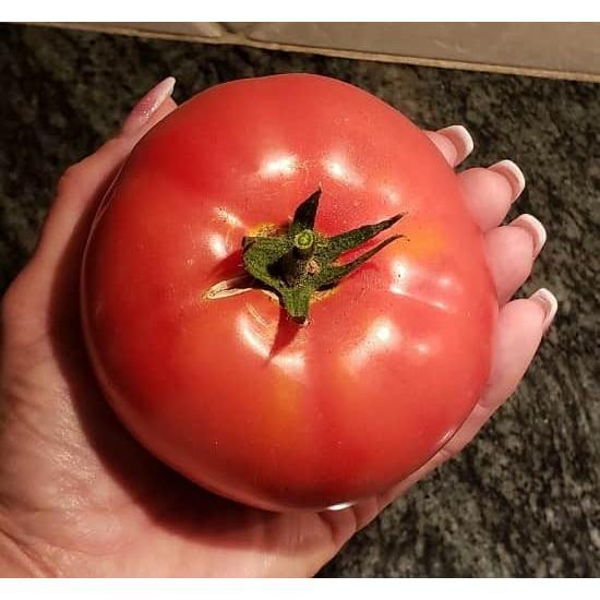 Hạt giống cà chua beef F1