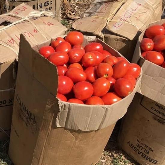 Hạt giống cà chua chịu nhiệt F1