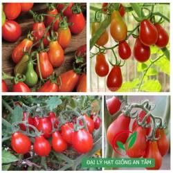 Hạt giống cà chua lê bi đỏ