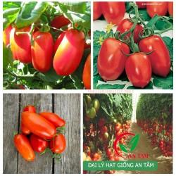 Hạt giống cà chua Roma VF