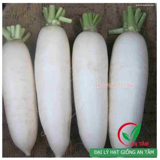 Hạt giống củ cải đường chịu nhiệt