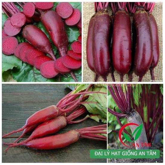 Hạt giống củ dền đỏ dài