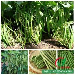 Hạt giống đậu cove bụi(cove lùn, cove ngồi)