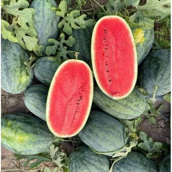 Hạt giống dưa hấu siêu ngọt f1