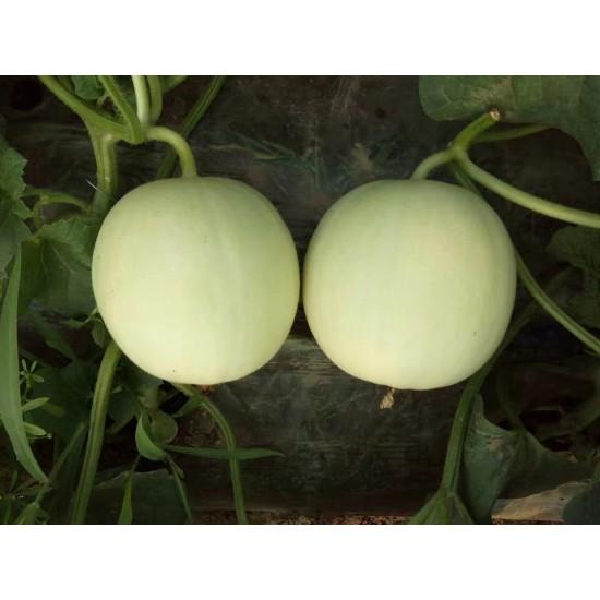 Hạt giống dưa lê cẩm ngọc