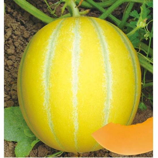 Hạt giống dưa lê hàn quốc ruột cam