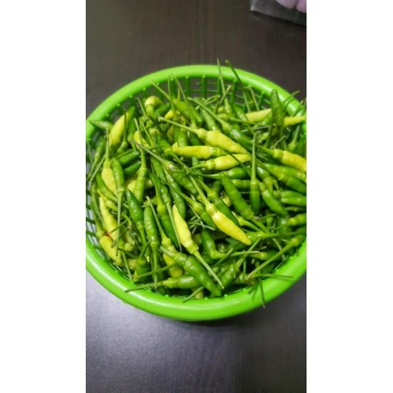 Hạt giống ớt xiêm xanh