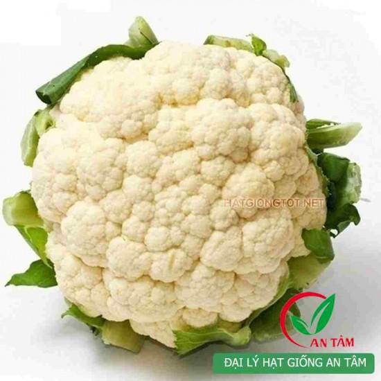 Hạt giống súp lơ trắng F1