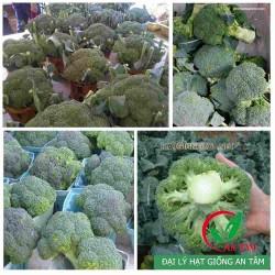 Hạt giống súp lơ xanh