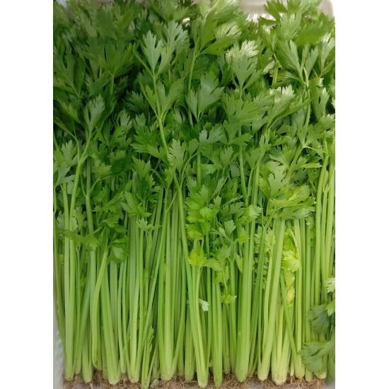 Hạt giống rau cần tây 10g