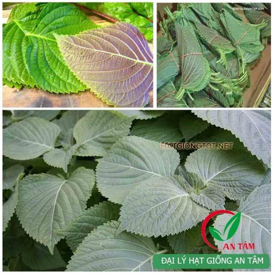 Hạt giống lá mè Hàn Quốc