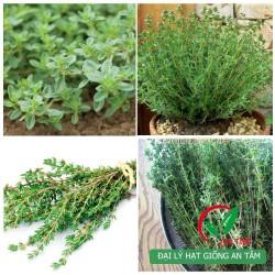 Hạt giống cỏ xạ hương (Thyme)