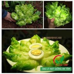 Hạt giống rau cải mầm đá