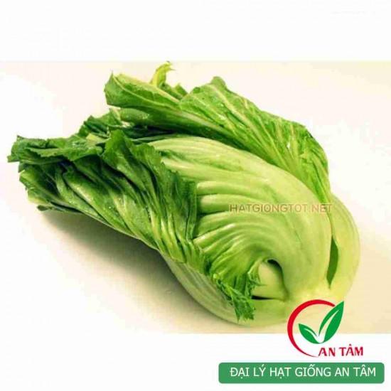 Hạt giống rau cải bẹ muối dưa