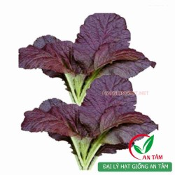 Hạt giống rau cải canh lá đỏ