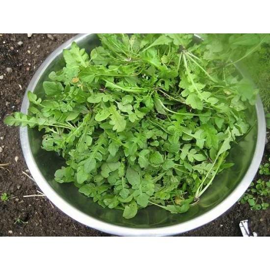 Hạt giống rau cải trời(cải hoang)