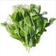 Hạt giống rau đậu hà lan siêu ngọn