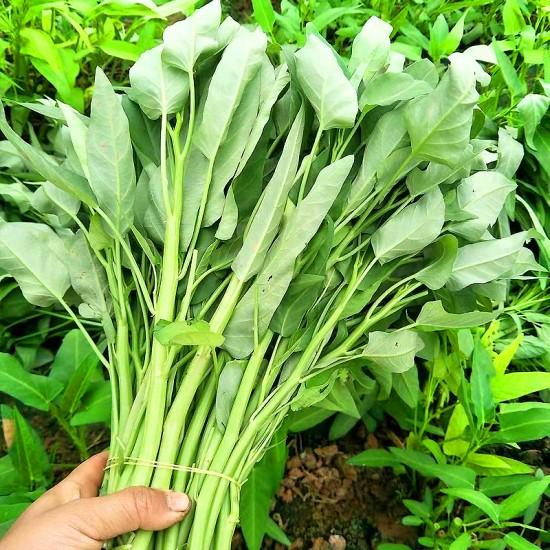 Hạt giống rau muống lá to thái lan
