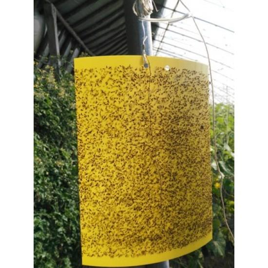 Tấm dính côn trùng nông nghiệp màu vàng