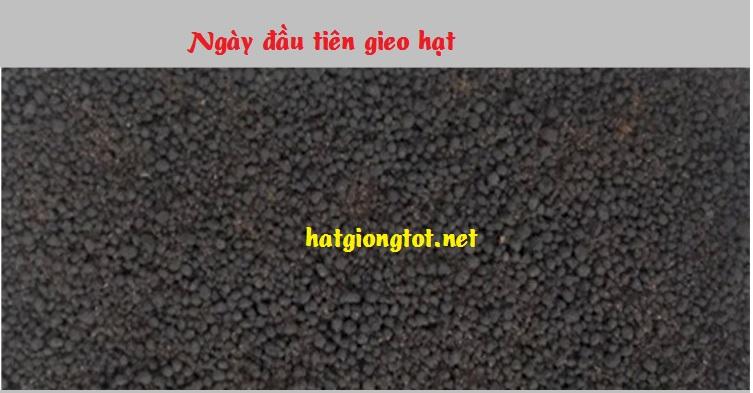 Cách gieo hạt giống thủy sinh